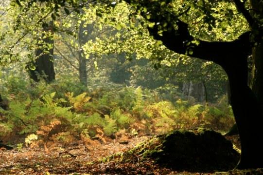 NewForest (1a)_2